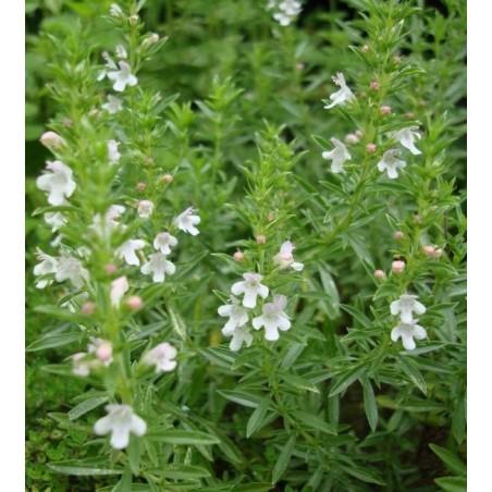 hydrolat de rose centifolia