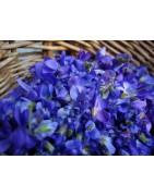 Crèmes Aromatiques Fluides, spécial visage, 100% naturels, producteur bio