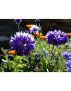 Hydromlat Bio, Phyt'Flor, les Synergies